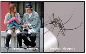 Teenmosquito